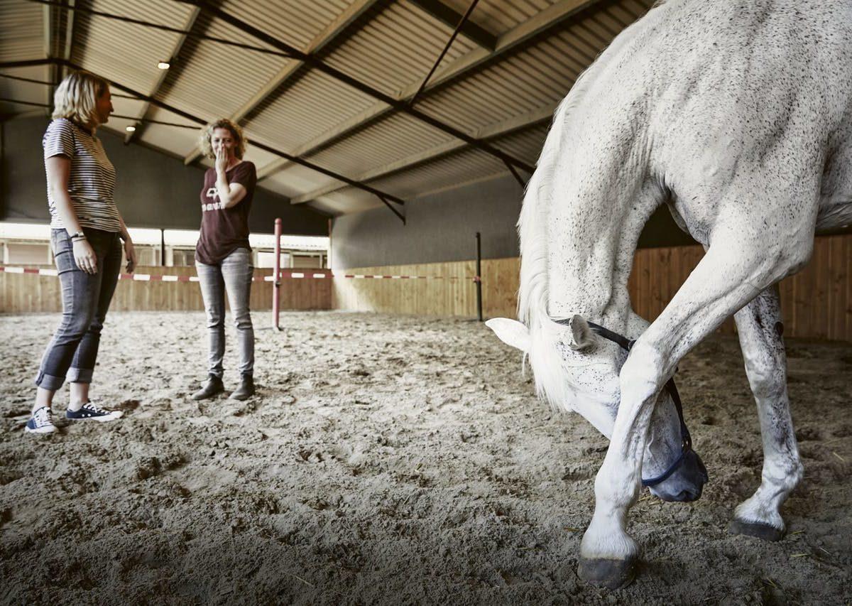 Vertrouwen komt te paard